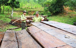 Quảng Nam sắp xếp lại bộ máy quản lý và bảo vệ rừng