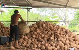 Tìm giải pháp bền vững cho chế biến nông sản