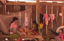 Cảnh báo dụ dỗ lao động trẻ em tại Tây Nguyên