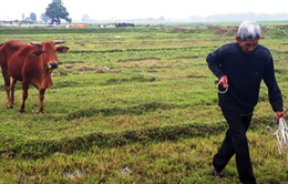 Thu phí trâu bò ra đồng gặm cỏ: Hoàn tiền, xin lỗi dân