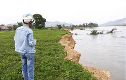 Bình Định: Nông dân mất đất do khai thác cát