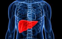 Phát hiện phương pháp mới giúp bảo quản tốt gan cấy ghép