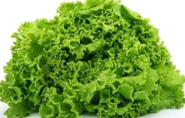 Mỹ cảnh báo khuẩn E.coli trong rau diếp