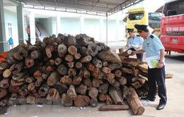 Quảng Nam: Bắt giữ xe tải vận chuyển hơn 2000 kg gỗ trắc không rõ nguồn gốc