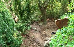 Đồng Tháp: Người đàn ông bị điện giật tử vong khi đang kéo cây
