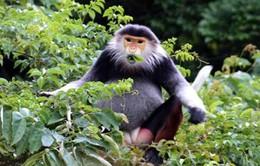 Đà Nẵng: Thực hiện đồng bộ các biện pháp bảo vệ động vật hoang dã