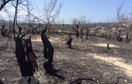 Chủ tịch tỉnh Bình Định: Dự án điện gió không làm mất rừng, mất titan