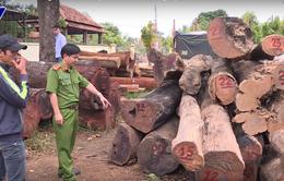 Truy quét các đối tượng khai thác gỗ trái phép với quy mô lớn tại Vườn Quốc gia Yók Đôn