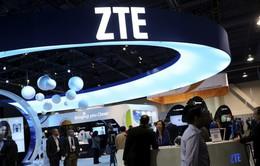 ZTE cân nhắc bán mảng kinh doanh điện thoại thông minh