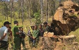 Tấn công hang ổ lâm tặc ở vườn quốc gia Yok Đôn