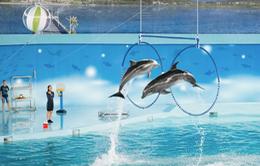 Cần gì đi đâu xa, đi xem trình diễn cá heo ngay tại Hà Nội!