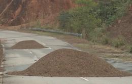 """Kon Tum: Con đường """"nghìn tỷ"""" chỉ dành để... phơi nông sản"""