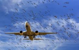 Hàng chục chuyến bay của Vietjet Air bị huỷ và ảnh hưởng dây chuyền do chim va vào cánh tàu bay