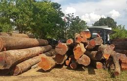 Cục Cảnh sát môi trường bắt vụ gỗ lậu quy mô lớn