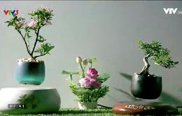 Độc, lạ thú chơi bonsai bay