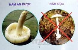 Ngộ độc nấm tại Hà Giang: 3 người tử vong, 1 người nguy kịch