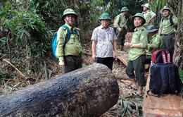 Quảng Nam đình chỉ công tác 6 cán bộ kiểm lâm liên quan đến 2 vụ phá rừng