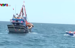 Quảng Bình đẩy mạnh kiểm soát đánh bắt hải sản trái phép