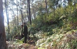 Tăng cường các biện pháp phòng chống cháy rừng tại An Giang