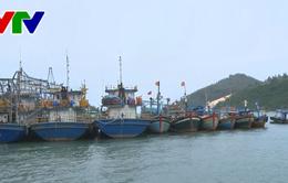 Bình Định: 41 chủ tàu vỏ thép nợ quá hạn trên 58 tỷ đồng