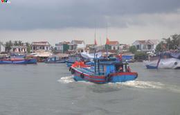Quảng Ngãi: Tăng cường kiểm soát hoạt động khai thác của các tàu cá