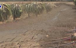 Hồ thủy lợi cạn nước, hơn 1.100 ha thanh long ở Bình Thuận thiếu nước tưới