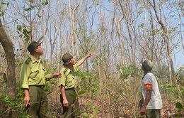 Khánh Hòa tăng cường phòng chống cháy rừng trong mùa khô