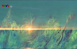 """""""Tình yêu biển, đảo"""" trong """"nét cọ"""" Nguyễn Ánh Dương"""