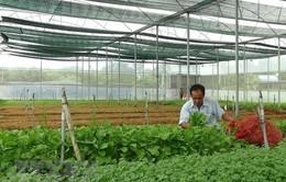 Xuất khẩu rau quả ước đạt 934 triệu USD trong 3 tháng đầu năm