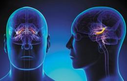 Người già vẫn có thể sản sinh tế bào não hàng ngày