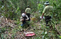 Kon Tum: Lâm tặc sử dụng vũ khí nóng, uy hiếp, đánh nhân viên bảo vệ rừng