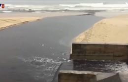 Đà Nẵng: Sau cơn mưa lớn, nước thải bốc mùi hôi thối lại tràn ra biển