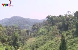 Quảng Nam, nhiều lỗ hổng trong quản lý bảo vệ rừng