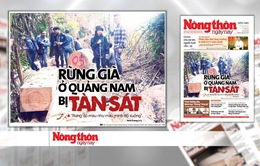 Rừng quý ở Quảng Nam lại bị tàn phá: Trách nhiệm của cơ quan chức năng ở đâu?