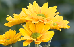 Nông dân đầu tiên xuất khẩu hoa trực tiếp không qua trung gian