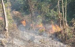 Lâm Đồng tăng cường phòng chống cháy rừng