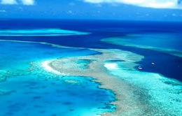 Australia đầu tư 400 triệu USD bảo tồn rạn san hô Great Barrier