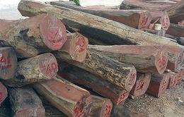 Đăk Nông: Tạm đình chỉ Trạm phó Trạm quản lý bảo vệ rừng số 1
