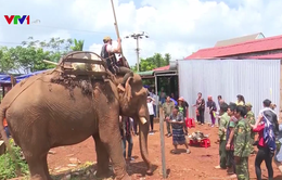 Độc đáo lễ cúng sức khỏe cho voi của người M'Nông
