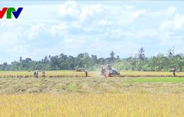 Đắk Lắk: Khẩn trương làm rõ vụ việc bảo kê trong thu hoạch lúa ở Krông Pắk