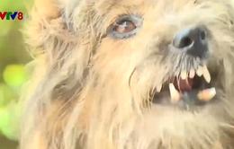 Gia tăng người dân bị chó dại cắn ở Phú Yên
