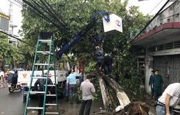 Gió giật mạnh, hàng loạt cây xanh ngã đổ tại Biên Hòa, Đồng Nai