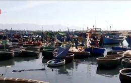 Bình Thuận: Hiểm nguy rình rập từ việc hoán cải thuyền thúng