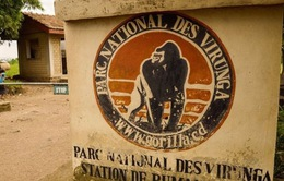 Congo: Hai khách du lịch người Anh bị bắt cóc tại công viên Virunga