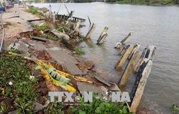 Sạt lở nghiêm trọng tại Đồng bằng sông Cửu Long