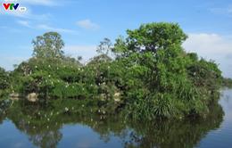 Bình Định: 250 hộ dân xóm ốc Đảo Cồn Chim có điện