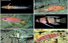 Phát hiện hơn 100 loài mới ở khu vực biển Bermuda