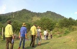 Quảng Nam chủ động phương án phòng chống chữa cháy rừng trong mùa khô