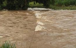 Đắk Nông: Nỗ lực tìm kiếm nạn nhân bị nước cuốn trên sông Krông Nô