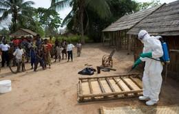 WHO: Ebola có khả năng gây ra đại dịch toàn cầu